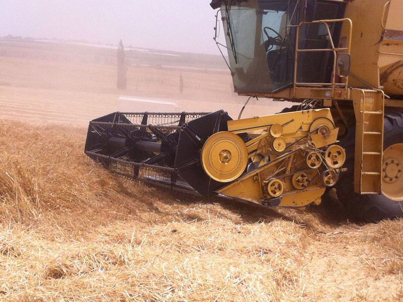 Yakhin Yavnial - Wheat harvest 2015